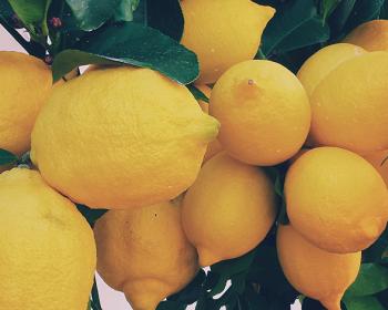 Pite pohár teplej vody s citrónom každé ráno